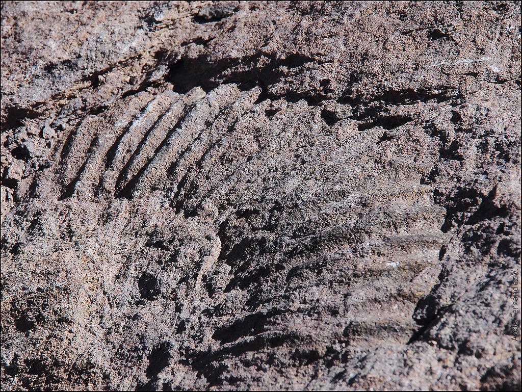Fósil en el valle del Arenas, en el sector de la laguna de Rubillas, diedro del Mai. Juan Cristóbal Hurtado