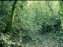 Bosque santiaguino