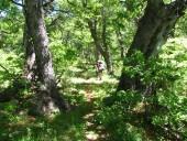 De regreso en el bosque