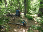 Por el bosque hacia el campamento