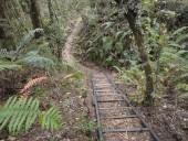 Tramo boscoso