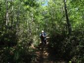 Por dentro del bosque de renovales