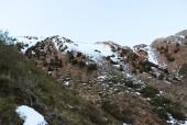 Bosque de ciprés cordillerano