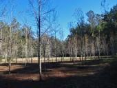 Bosque de ruiles