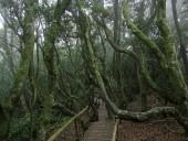 Bosque hidrófilo