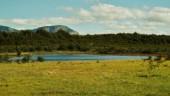 Laguna Los Mallines