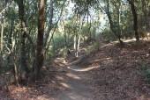 Sendero del bosque