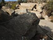 Petroglifos junto al estero