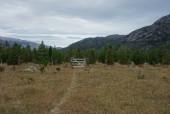 Portón sector de pinos.