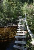 Puente escalera 1