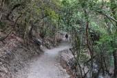 Sendero bajo el bosque