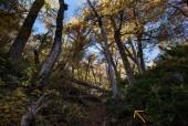 Sendero por bosque de robles