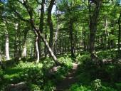 Bosque de coigüe