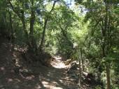 Por el bosque de bellotos