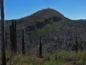 Vista hacia el bosque quemado de la reserva
