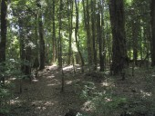 Bosque de ulmos