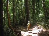Sendero entre los saltos del Huilo Huilo y del Puma