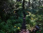 Bosque nativo I