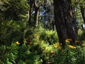 Bosque nativo II