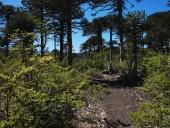 Bosque inicial