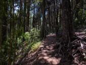 Parte superior del sendero