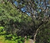 Árbol con nombre