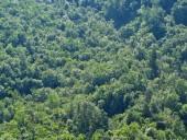 Vista hacia el bosque