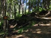 Letrero en el bosque