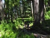 Por dentro del bosque