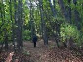 Bosque de hualos