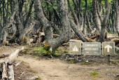 Campamento Neozelandés
