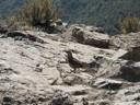 Minero Cordillerano en la Cumbre