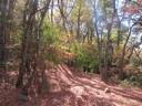 Bosque Otoñal del Roble