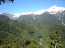 Yate y bosque nativo