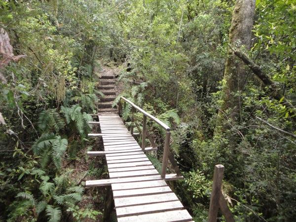 Puente fin bosque