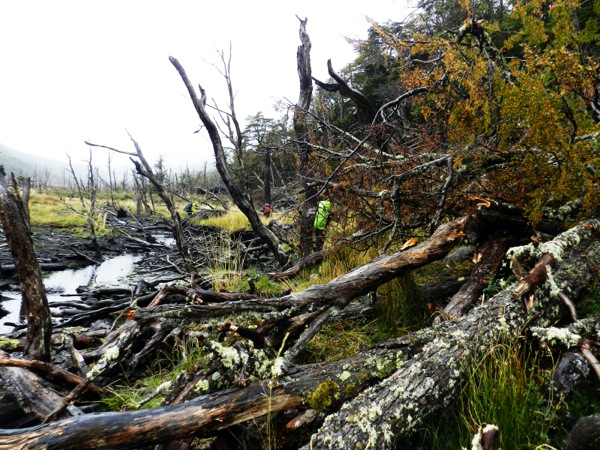 Árboles caidos / Zona inundada.