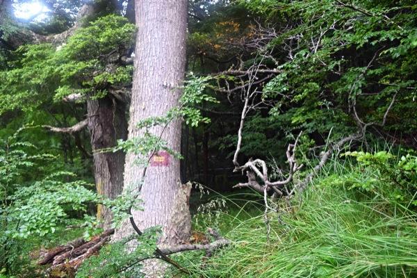 Marcas en los árboles en el último bosque
