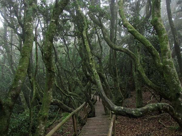 Bosque hidrófilo de olivillos