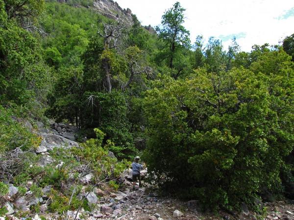Entrando al bosque de roble