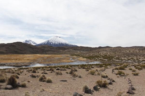 Bofedal Uncaliri y Payachatas