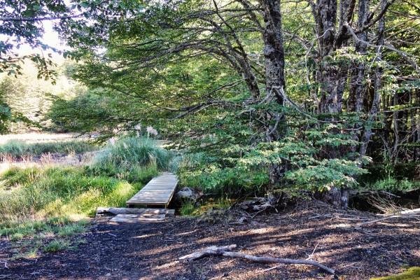 Puentes en senderos que cubren parte de las orillas de la la laguna