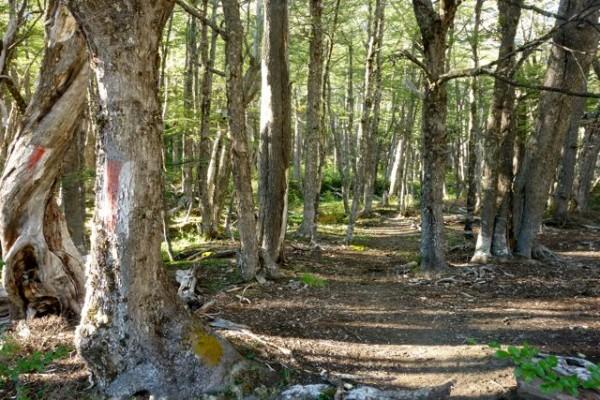 Ingreso al bosque en cuesta hacia el paso El Peñón