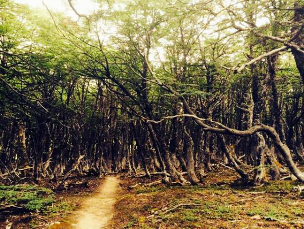 Bosque Tolkiano