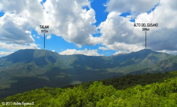 Cerro Alto del Gusano