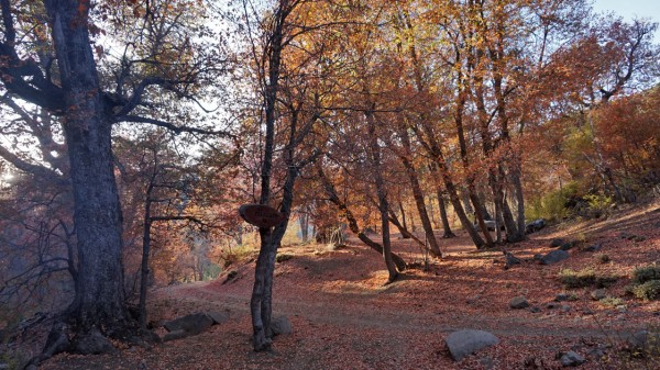 Campamento el Manzano