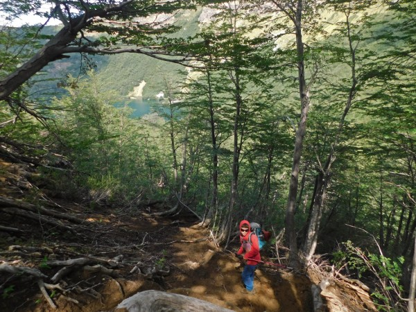 Descenso por el bosque