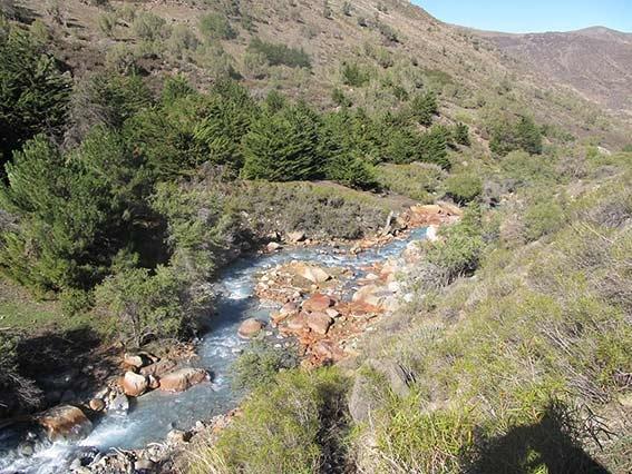 Estero Yerba Loca