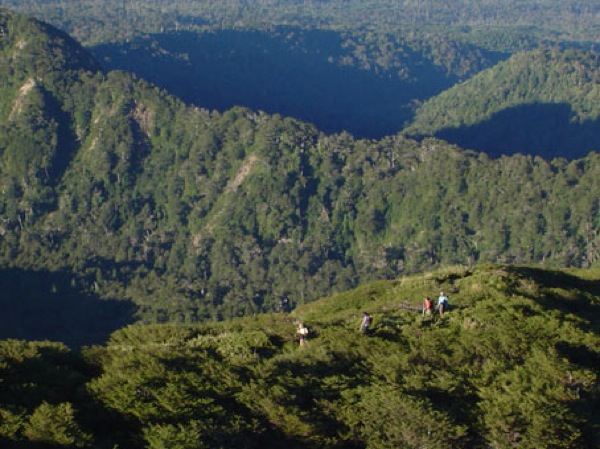 Bosques sobre el refugio