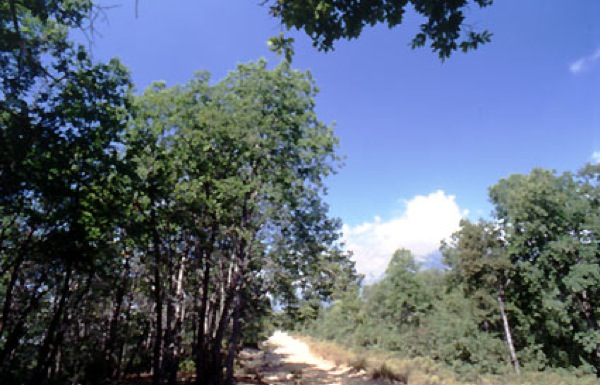 Camino vecinal Valle del Venado