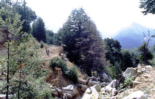 Camino forestal al interior de la reserva